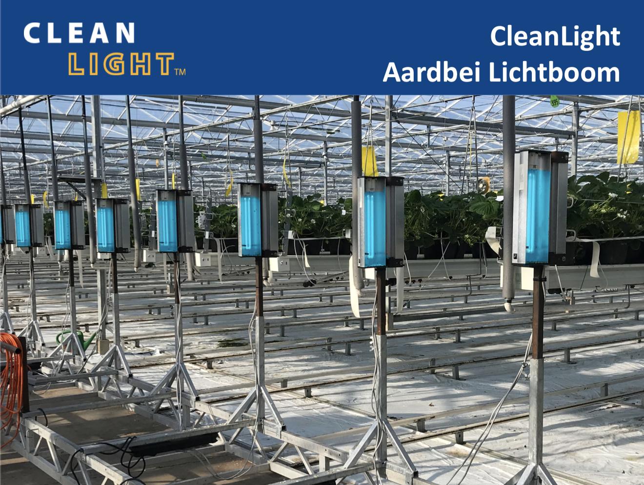 CleanLight Aardbei Lichtboom