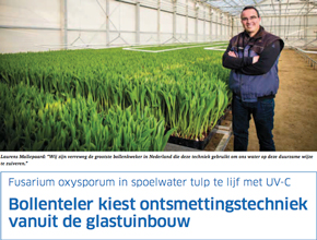 Fighting Fusarium in water for tulips with CleanLight