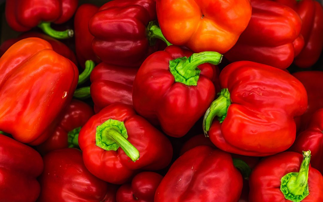 Tackling stem rot in bell peppers with UV